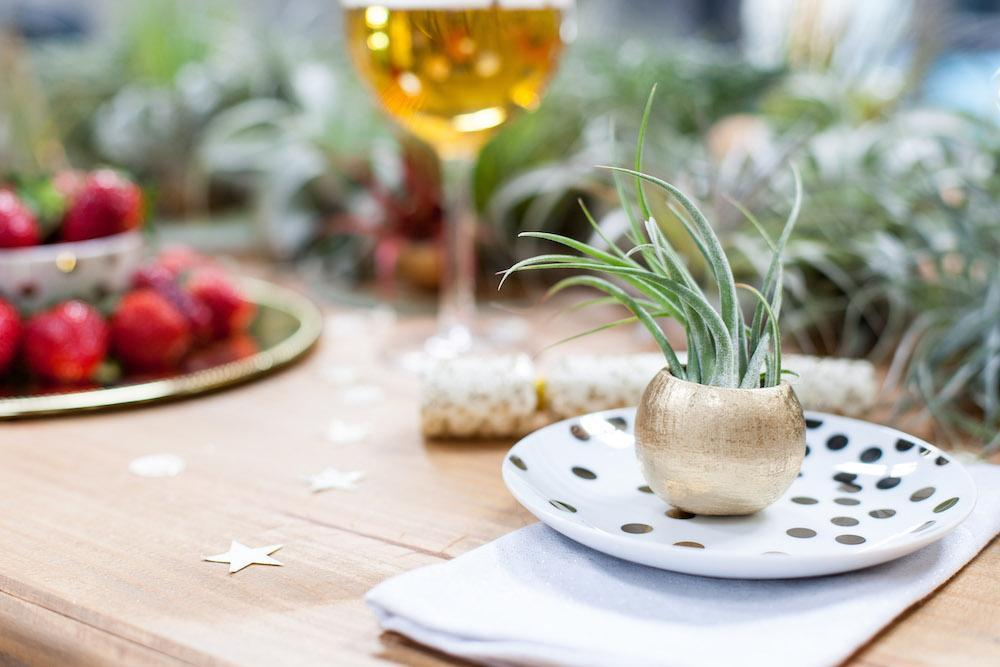 Galentine's Day: A Stylish Dessert Party with Air Plants