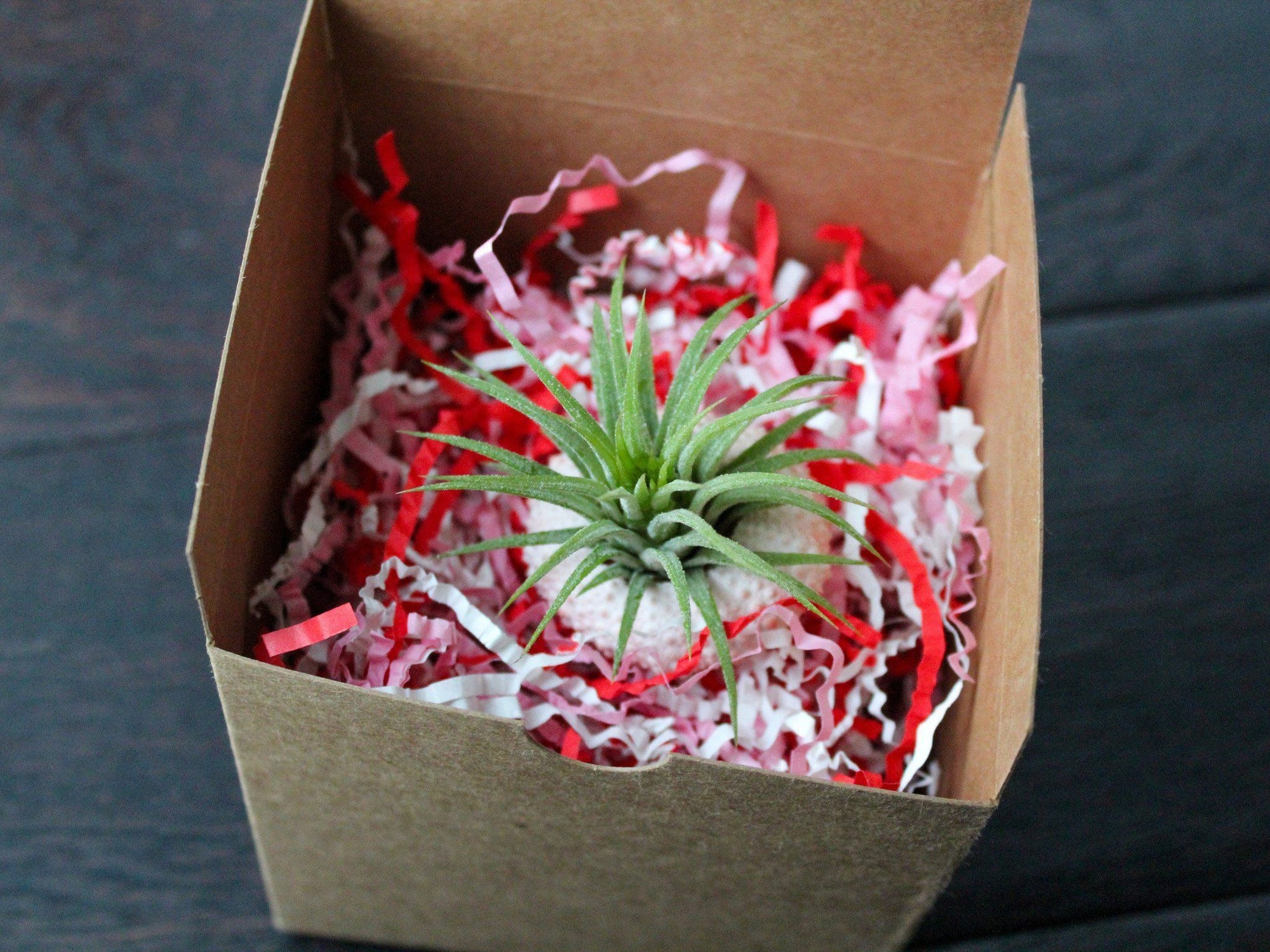 Sending Some Air Plant Love