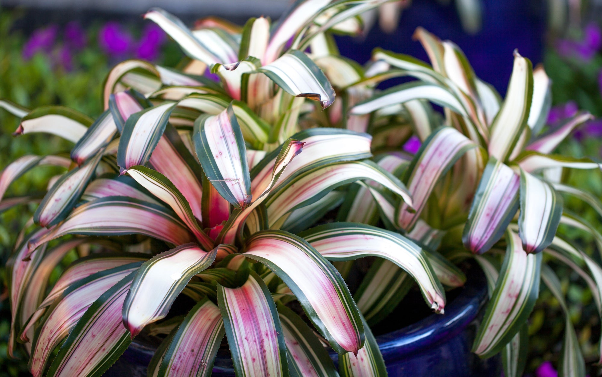 Let's Talk About Bromeliads!
