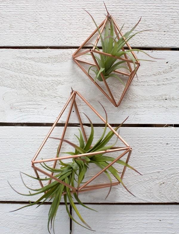 Things to Avoid When Caring for Air Plants
