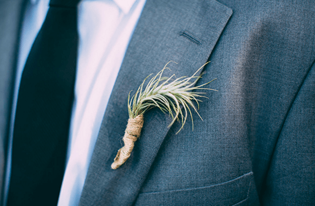 Air Plant Weddings: The Boutonniere