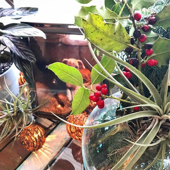 Holiday Decorating With Air Plants