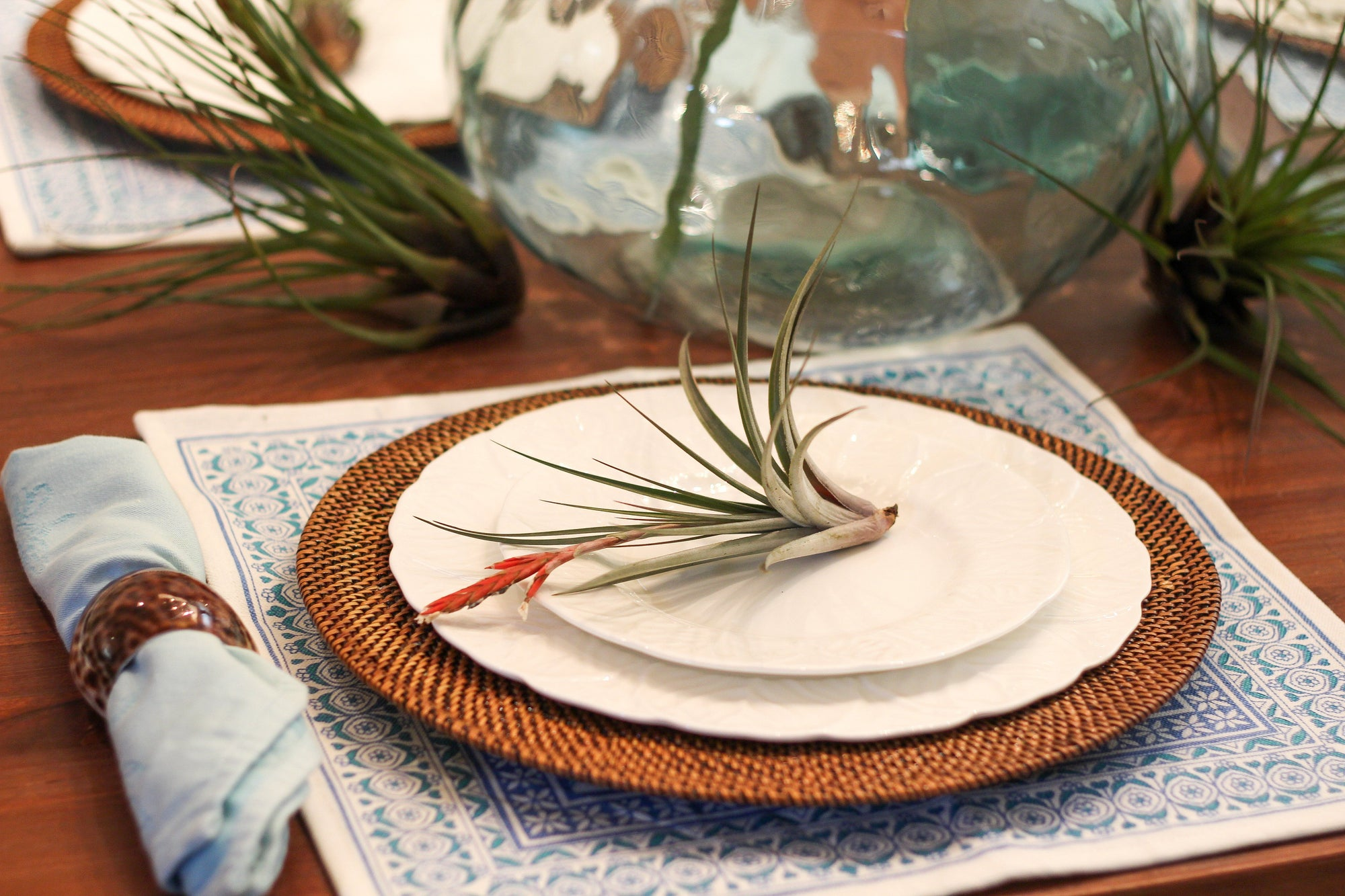 Setting the Table With Air Plants