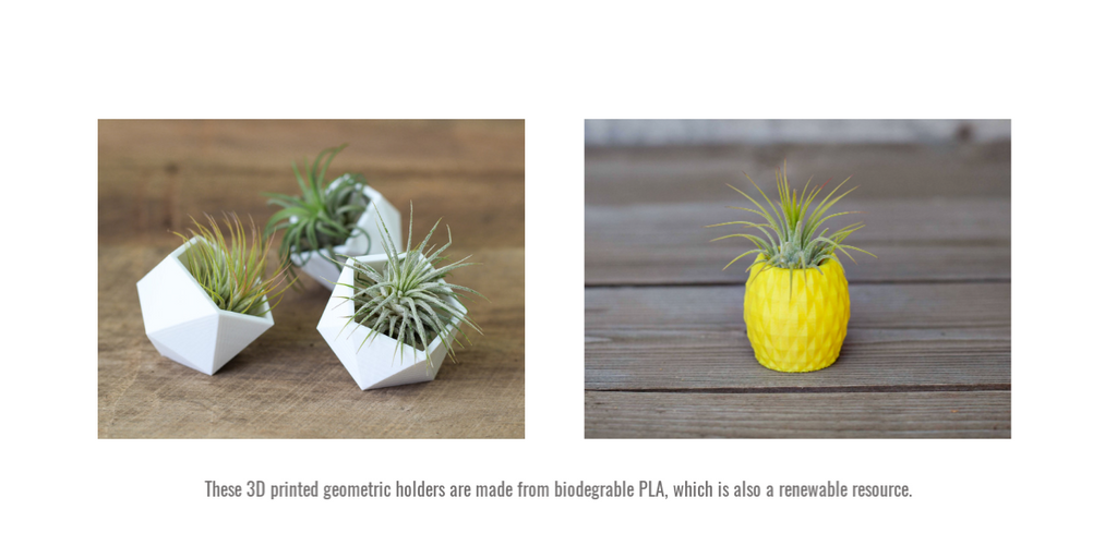 Geometric 3D printed Tillandsia holders