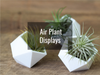 shop tillandsia air plant displays and containers