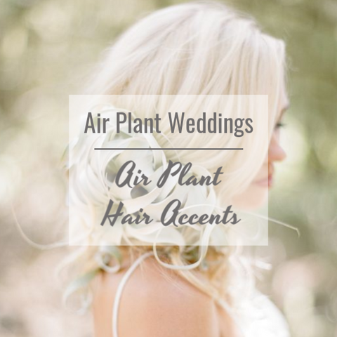 air plant hair accents