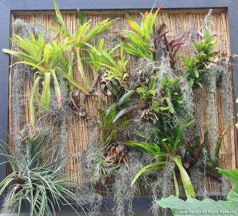 air plant display wall selby gardens