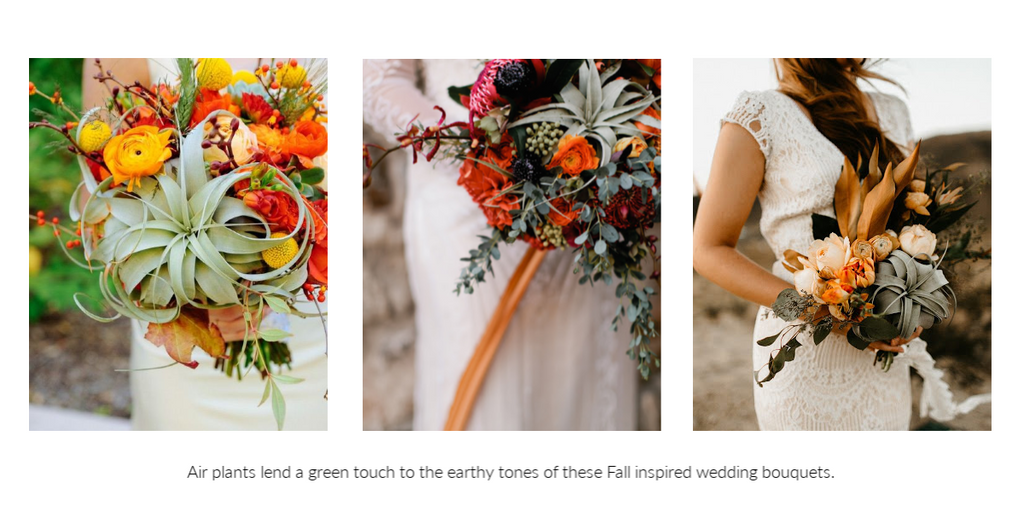 Tillandsia air plant wedding bouquets