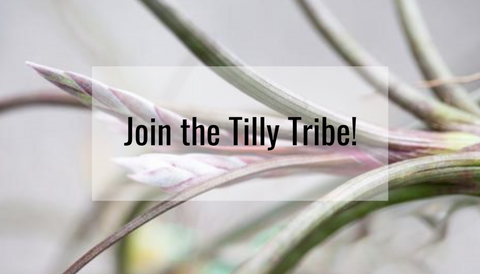 join the tilly tribe