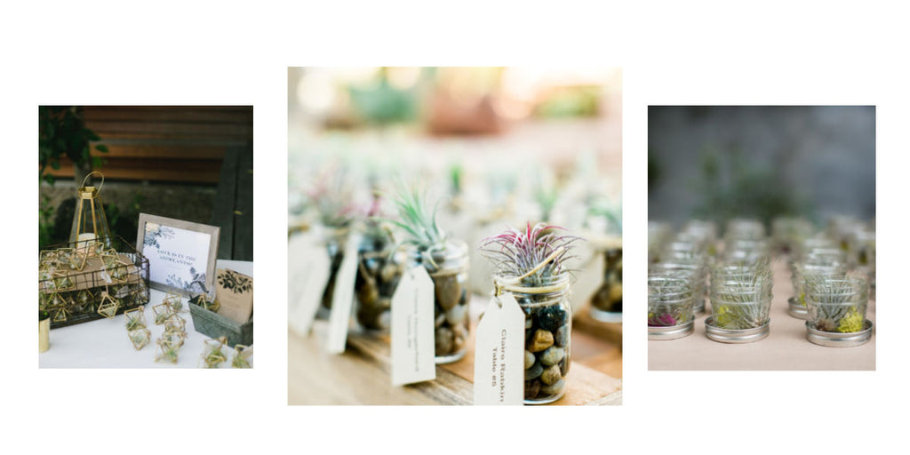 tillandsia air plant wedding favors