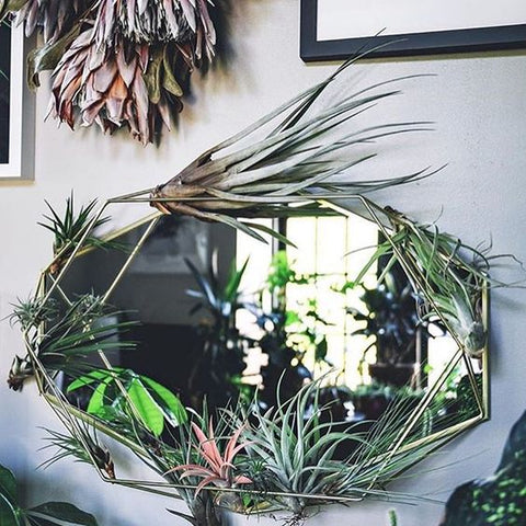 Tillandsia air plant mirror