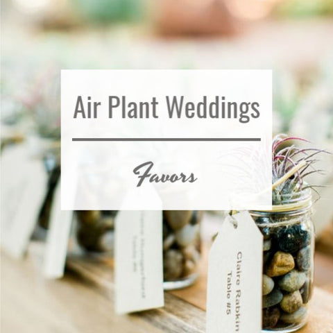 Air Plant Weddings: Favors