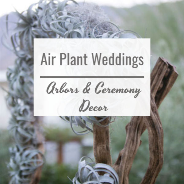 Air Plant Weddings: Arbors