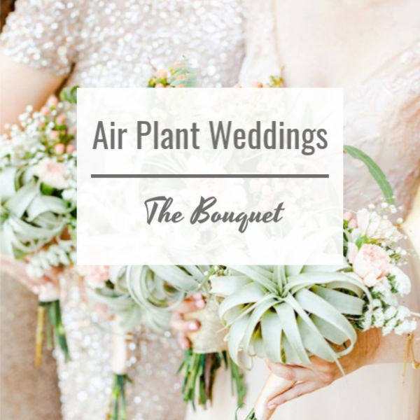 Air Plant Weddings: The Bouquet