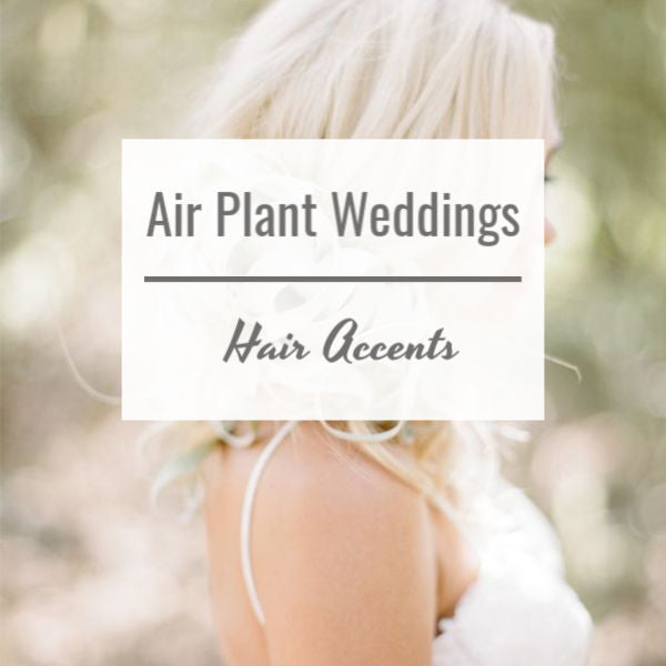 Air Plant Weddings: Hair Accents