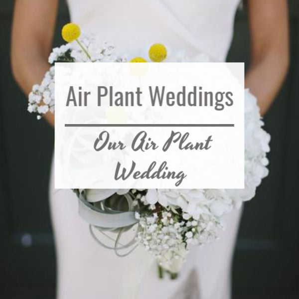Our Air Plant Wedding