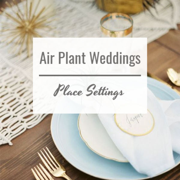 Air Plant Weddings: Place Settings