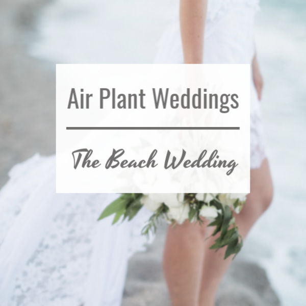 Air Plant Weddings: The Beach Wedding