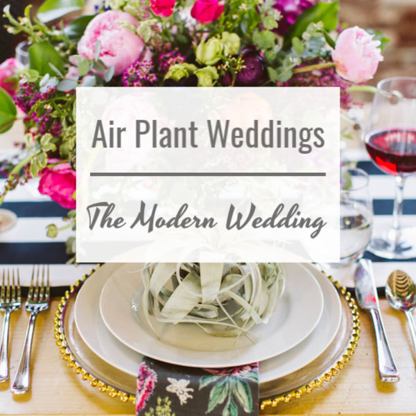 Air Plant Weddings: The Modern Wedding