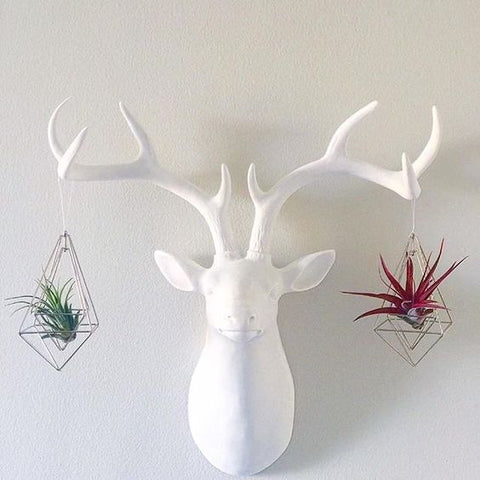 Tillandsia air plants in geometric ornaments hanging on faux deer head