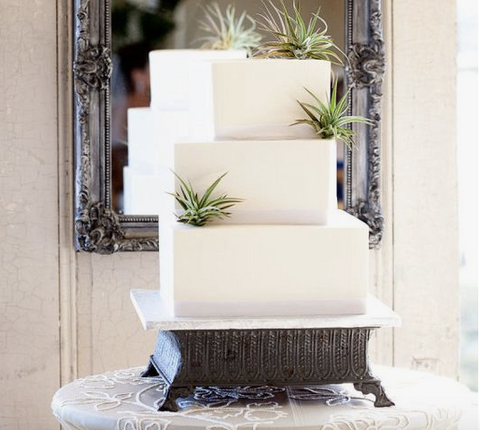 air plant wedding cake