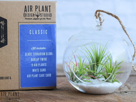 tillandsia air plant terrarium kit