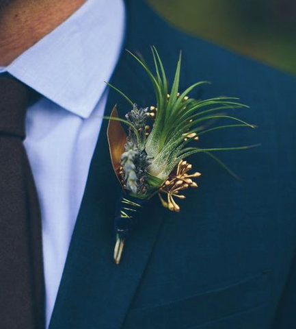 fall styled air plant boutonniere