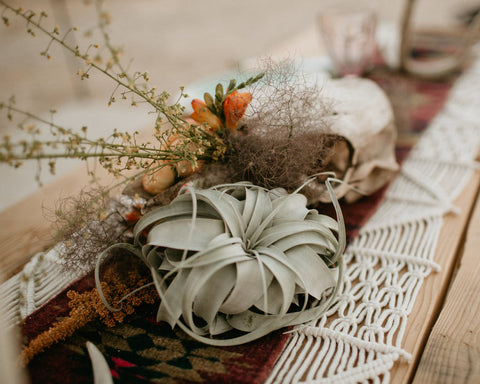 Tillandsia air plant wedding decor