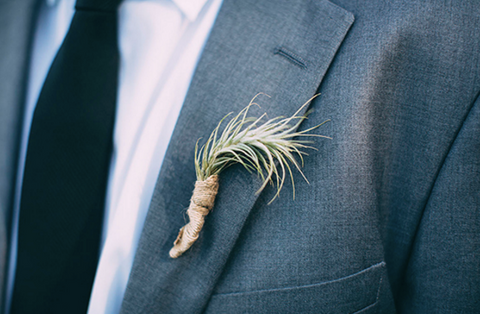 funckiana air plant boutonniere