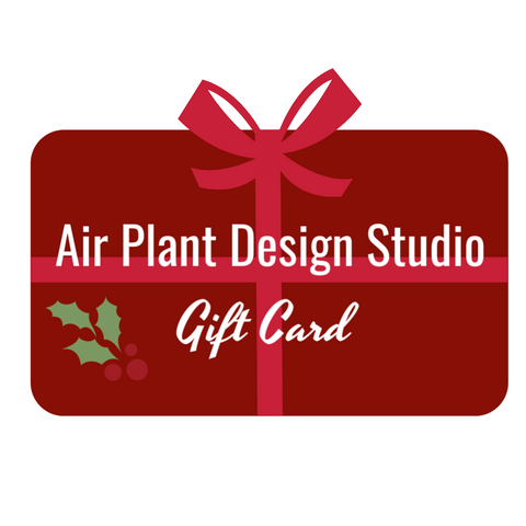 Air Plant Design Studio Gift Card
