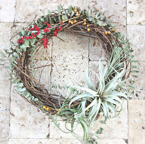 Holiday Tillandsia air plant wreath