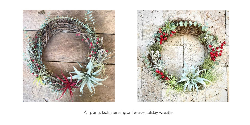 Tillandsia air plant wreaths
