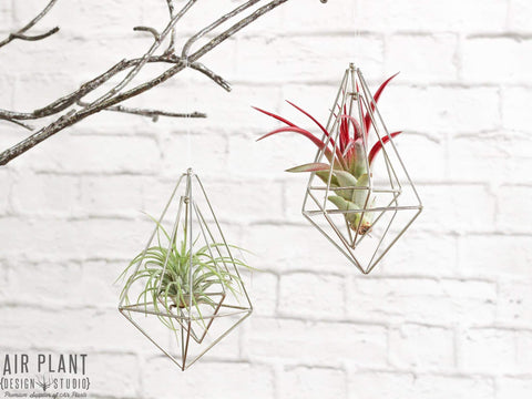 Modern geometric air plant ornaments