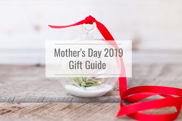 mothers day 2019 terrarium