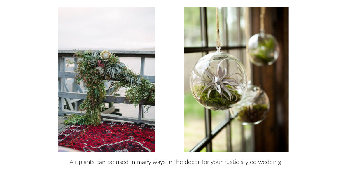 Tillandsia air plant rustic wedding decor