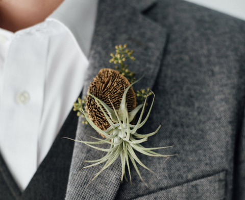 rustic air plant boutonniere