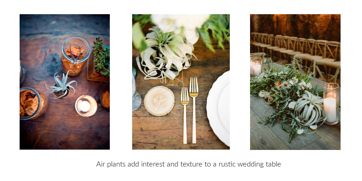 rustic wedding air plant decor