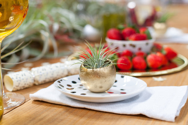 Air plant table scape