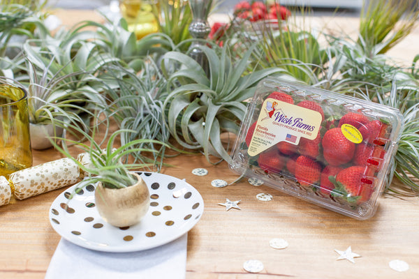 Air Plant Table Scape With Wish Farms Strawberries