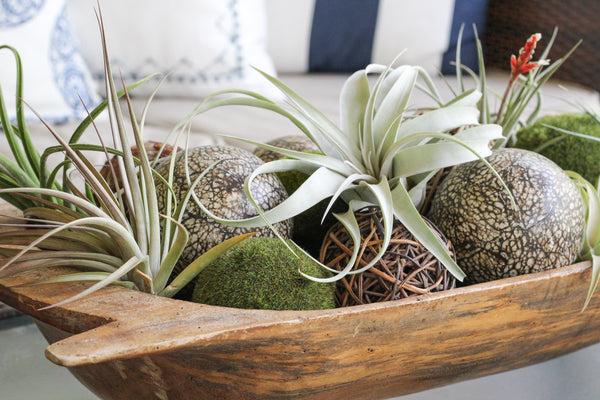 Air Plants displayed on a patio