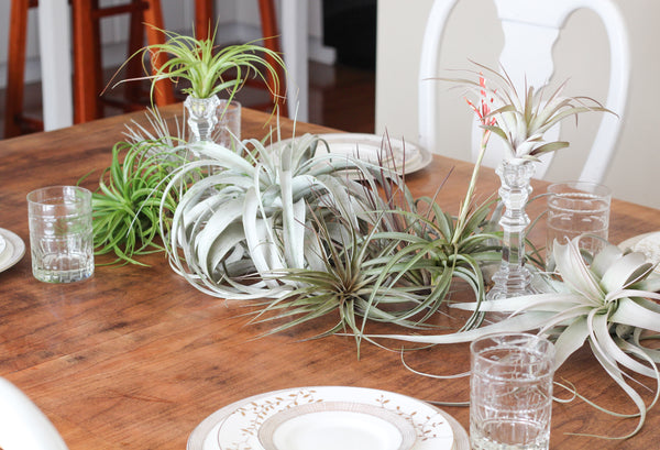 Tillandsia centerpiece table scape