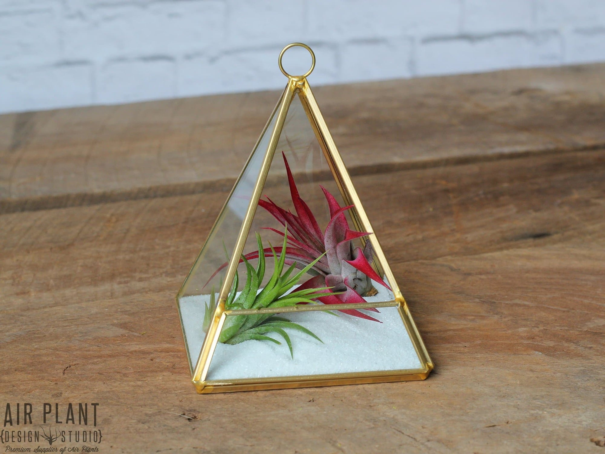 gold geometric tillandsia air plant terrarium