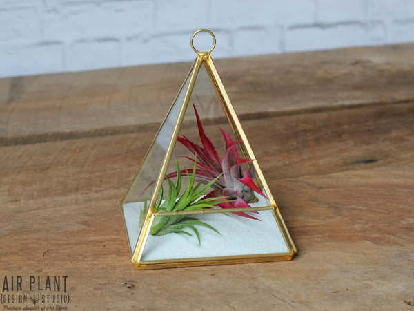 Gold Geometric Air Plant Terrarium