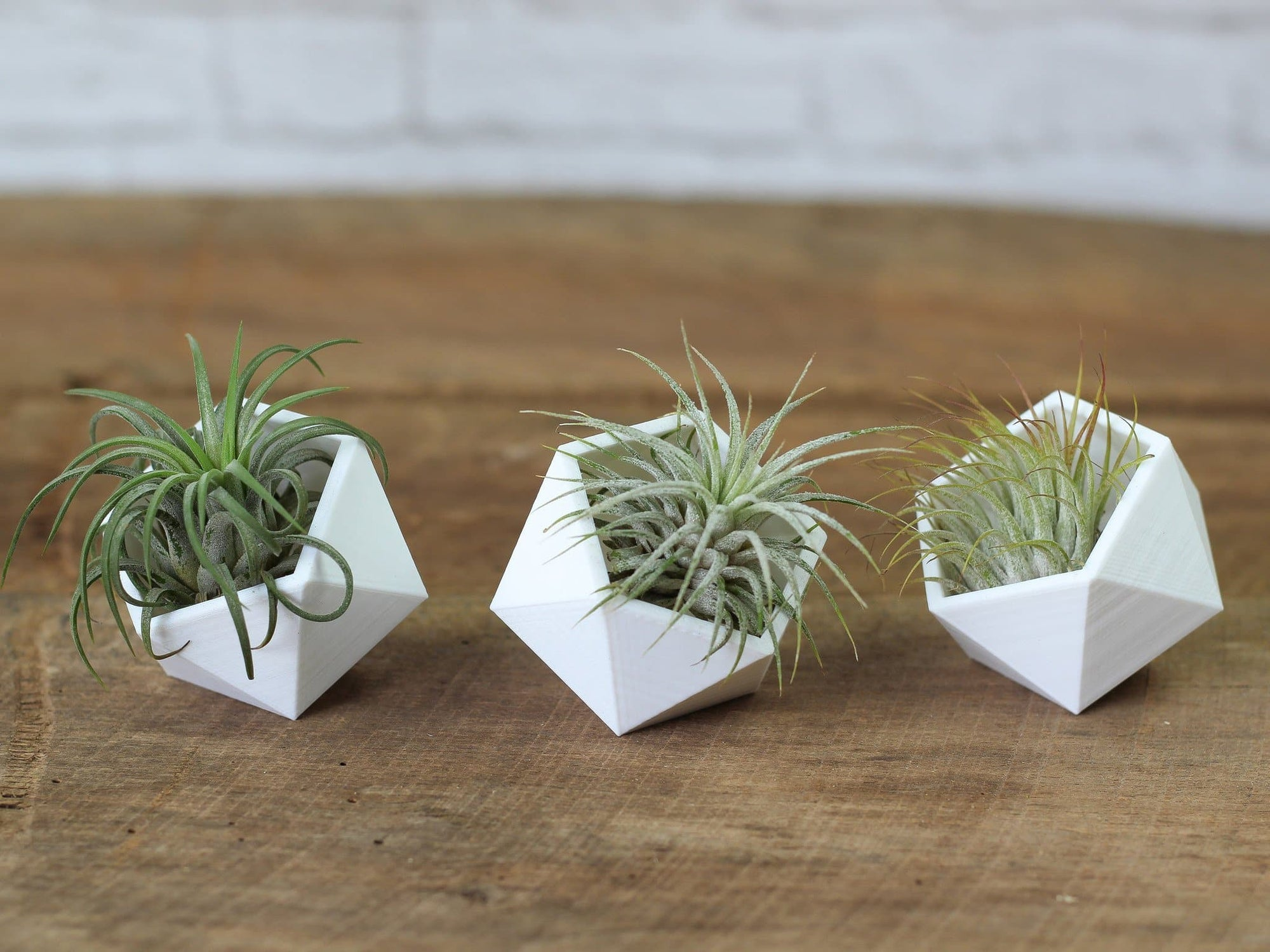 modern geometric air plant holders air plant design studio