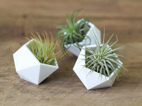 Modern Geometric air plant holders