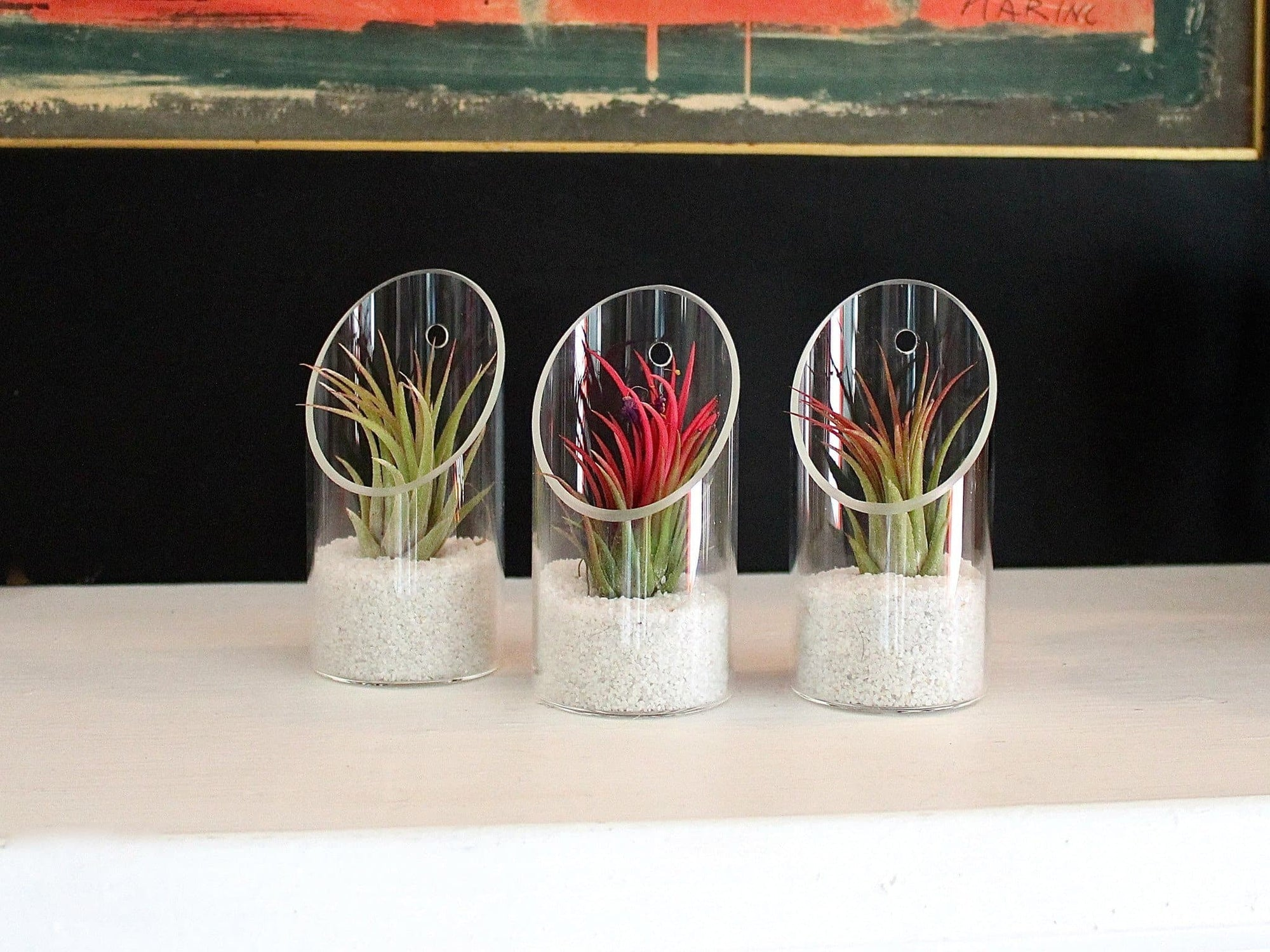 glass tillandsia air plant holders