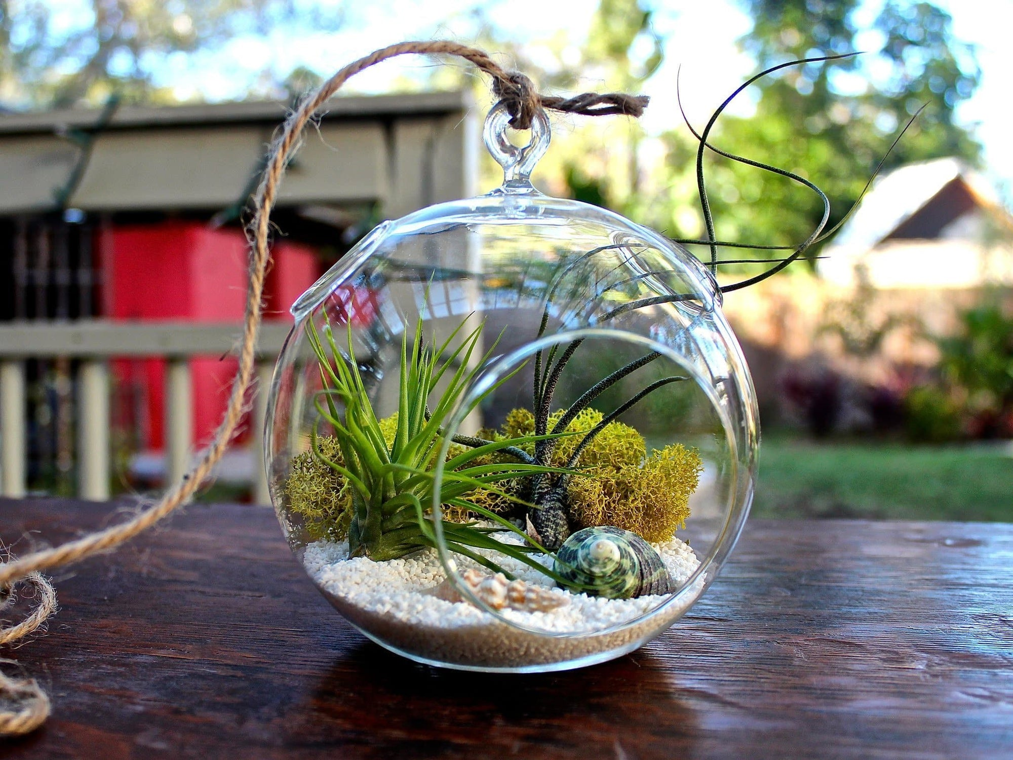 Air Plant Terrarium Hanging Air Plant Terrarium Ii Terrariums Air Plant Design Studio