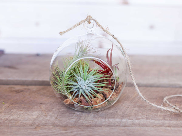 Rustic Air Plant Terrarium with bark
