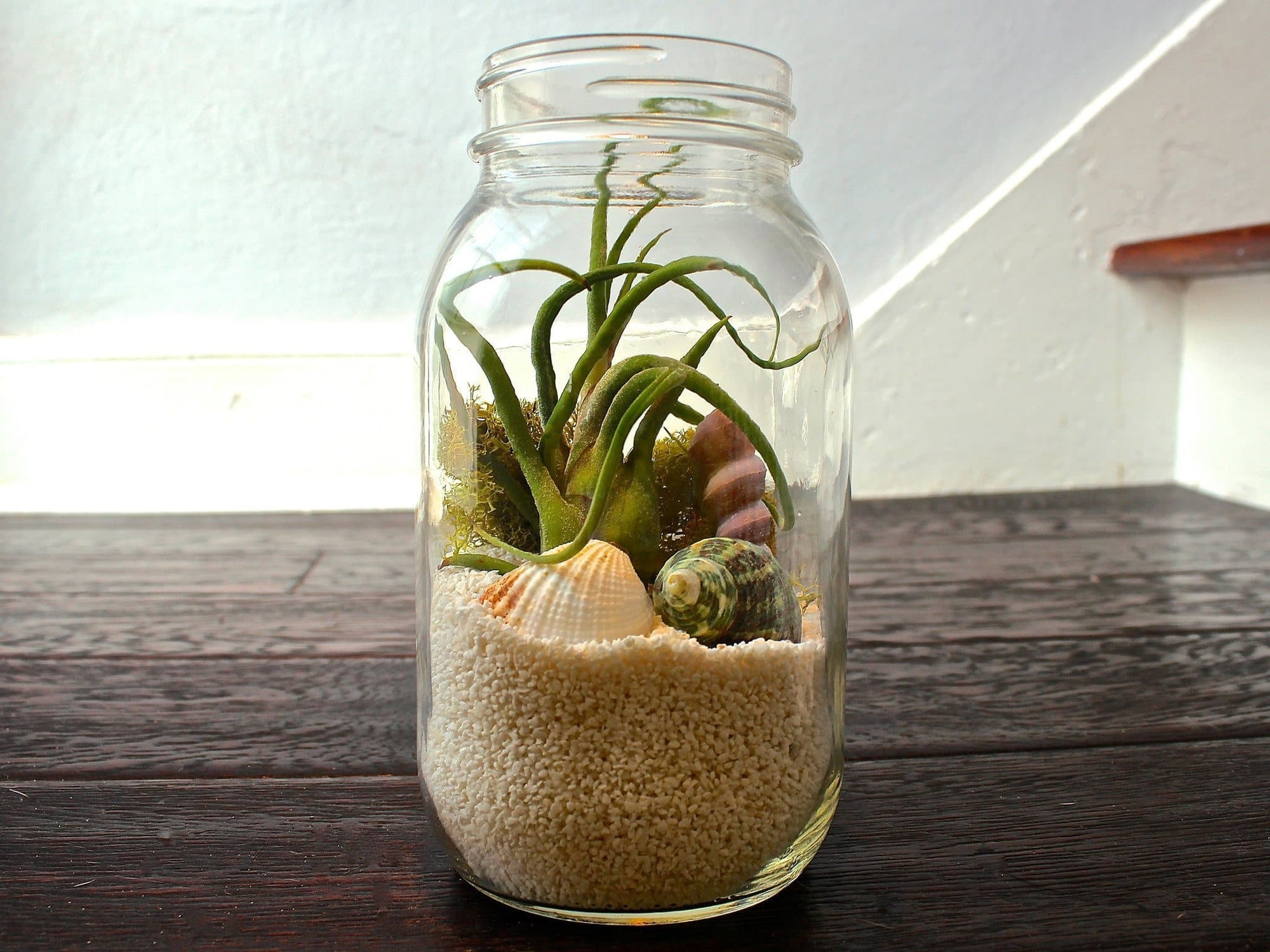 glass sea creature tillandsia air plant terrarium