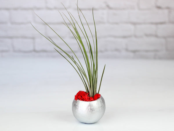 Metallic Silver Air Plant Pod